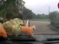 Babka ląduje na masce samochodu