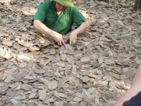 Kryjówka w lesie gdzieś w Wietnamie