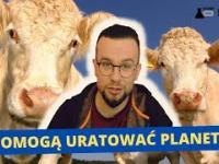 Krowy vs. plastik - 1:0