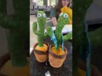Tajwańskie tańczące kaktusy śpiewają koksu pięć gram