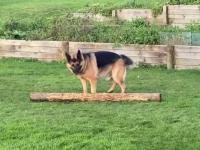 Pies przyniósł właścicielowi kawałek drzewa
