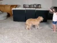 Imponujący tandem między tym dzieckiem a psem
