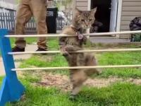 Koty to zwinne zwierzaki