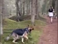 Kiedy masz dużą gałąź i jesteś psem