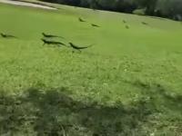 Szybkie nawracanie jaszczurek