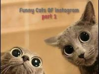 Funny Cats of Instagram - Part 1