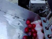 Proste urządzenie do usuwania pestek z wiśni/czereśni