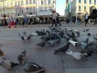 Gołębie - slowmotion