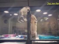 Kociak ucieka z kojca, aby pobawić się z kumplem
