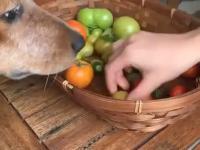 Pies - najlepszy pomocnik w kuchni