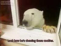 kolacja z niedźwiedziem
