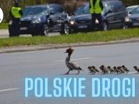 Cyrk na kółkach czyli Polskie drogi