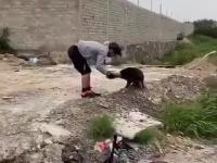 Pies wdzięczny dziękuje za pomoc