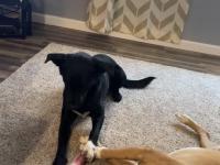 Pies kradnie kość śpiącemu koledze