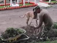 Dobry pies pomaga człowiekowi