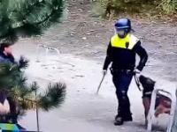 Pies potrafi rozpoznać, kto jest dobry, a kto zły...
